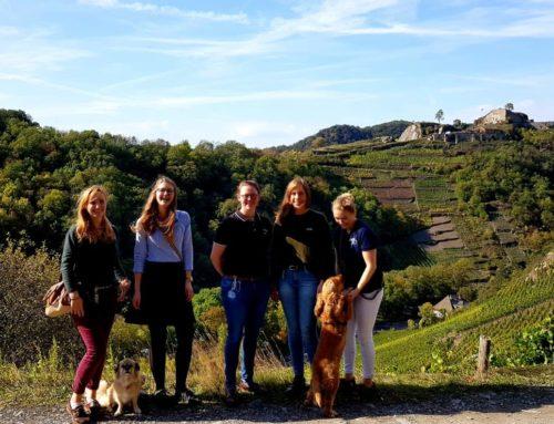 Weinwanderung im Ahrtal